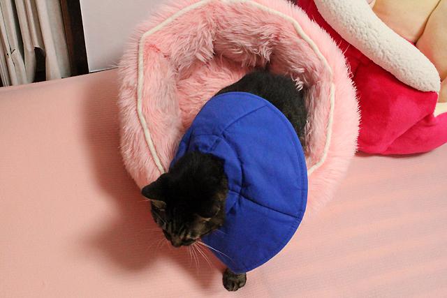 ピンクのふわふわベッド終了~