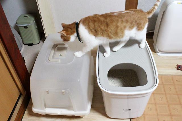 上から入る猫トイレ、トップキャット