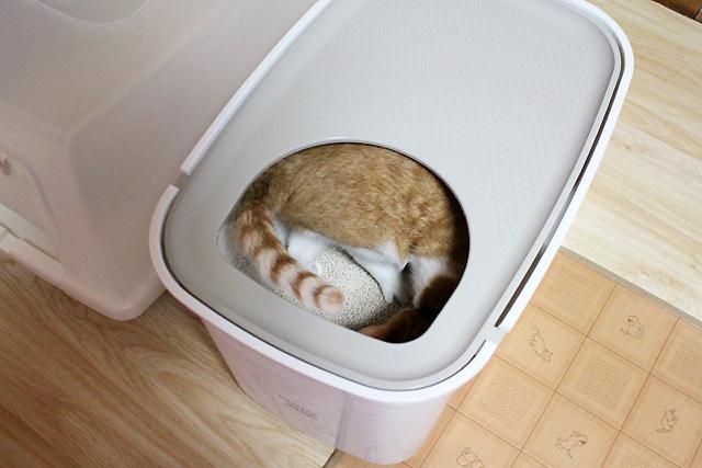 上から入る猫トイレ、入った~