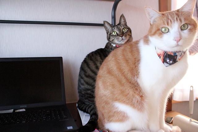 猫の手貸します!