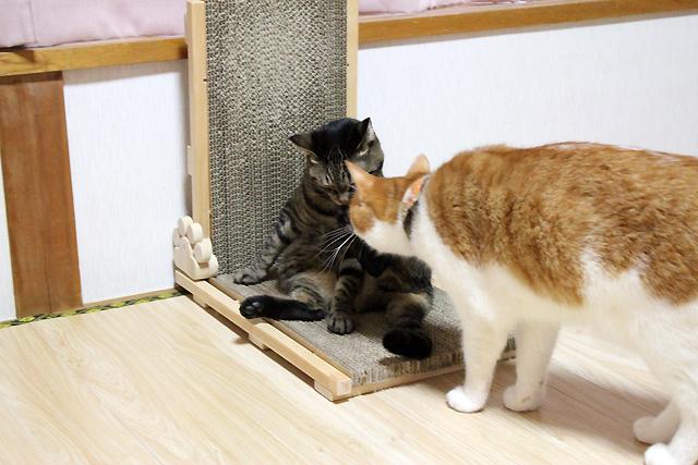 猫の手作り爪とぎ2