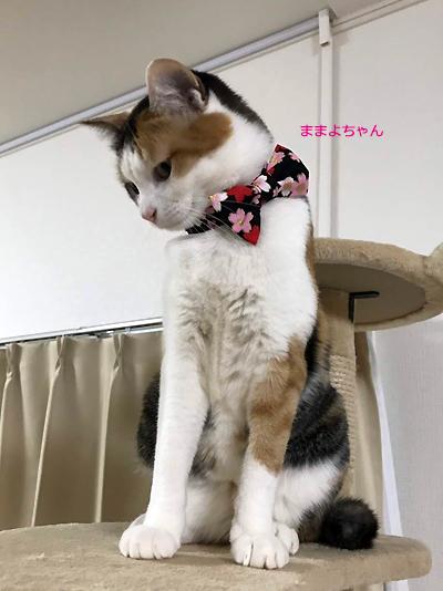 猫のおしゃれリボン「桜さくら」黒