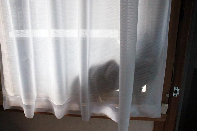 窓の外が気になるおめぐさん