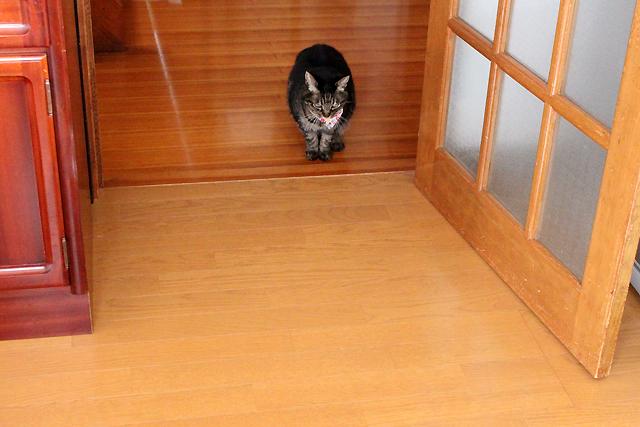 階段降りてきましたよ