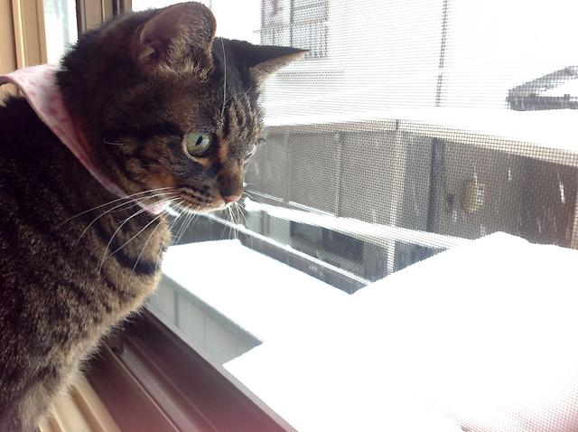 ちゃあさん雪見