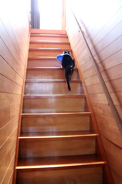 階段のぼりま~す