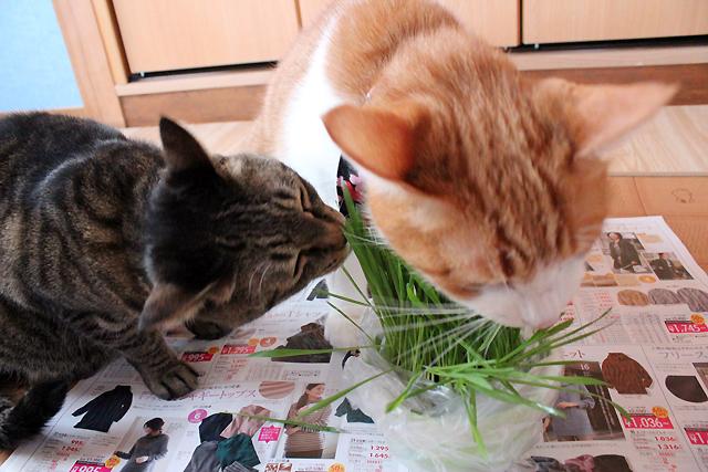 みんな猫草大好き♪
