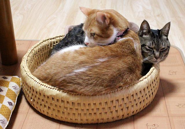 猫つぐら丸型なかよしベッド、猫堂