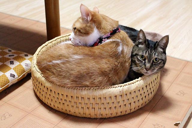 猫つぐら丸型なかよしベッド2(猫堂)