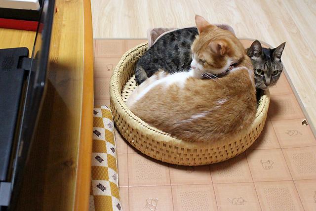 猫つぐら丸型なかよしベッド3,猫堂オリジナル