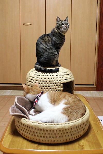 猫つぐらと猫つぐら丸型なかよしベッド