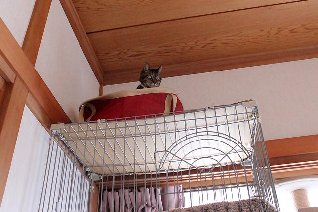掃除機大嫌い猫