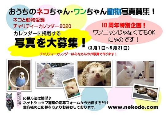 ネコと動物愛護チャリティーカレンダー2020、おうちのネコちゃん・ワンちゃん写真募集