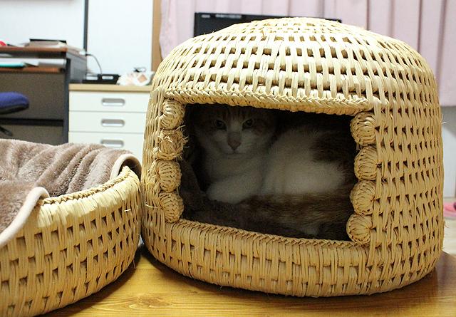 猫つぐら(猫ちぐら)@猫堂