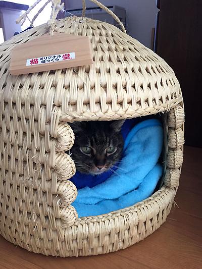 猫つぐら(猫ちぐら)でまったり猫