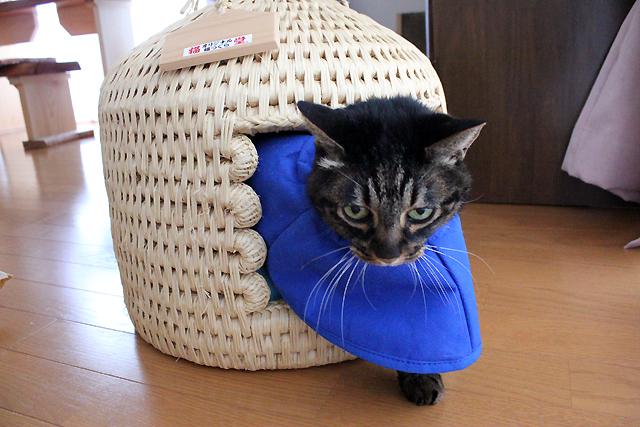 猫つぐら(猫ちぐら)からにょろりとでる猫