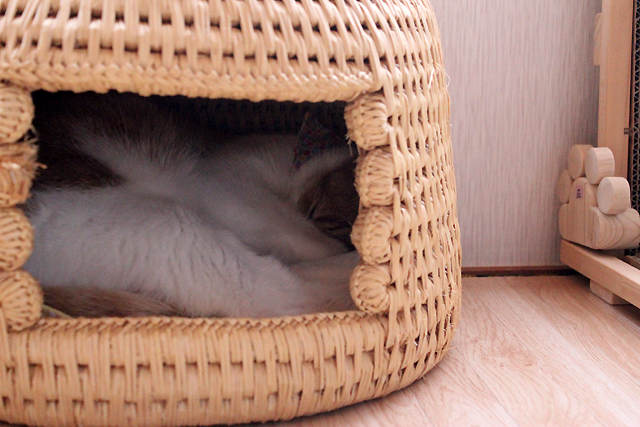 猫つぐらでぐーすかぴー