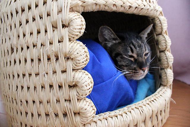窓辺の猫つぐら(猫ちぐら)