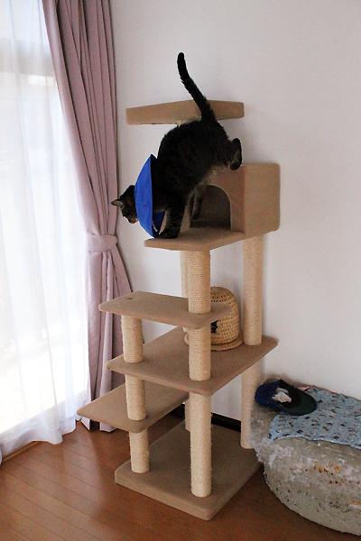 キャットタワー上手に降ります