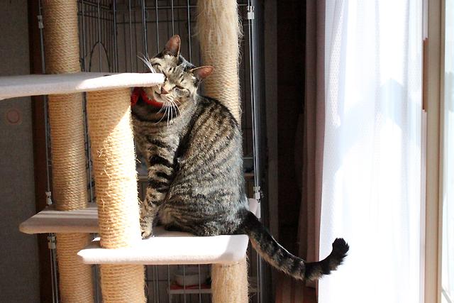 キャットタワーで顔を洗う猫