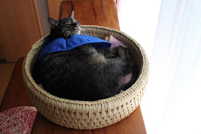 猫つぐら丸形なごみベッド