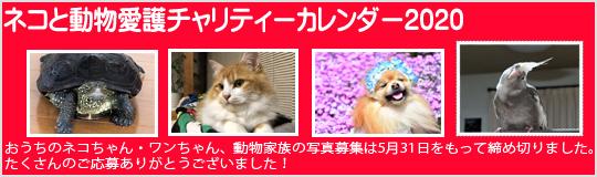 ネコと動物愛護チャリティーカレンダー2020、写真ご応募ありがとうございました