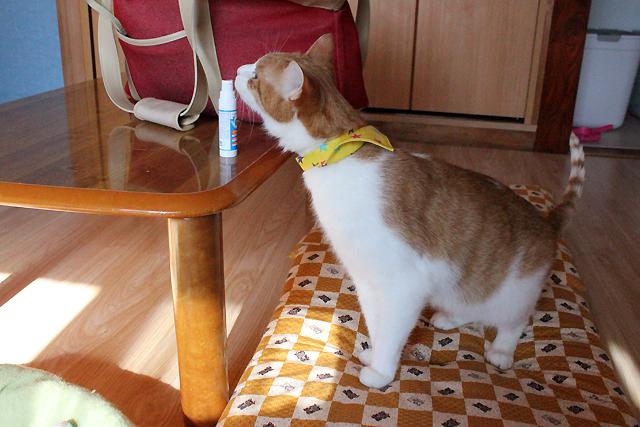プラクオリキッド大好き猫