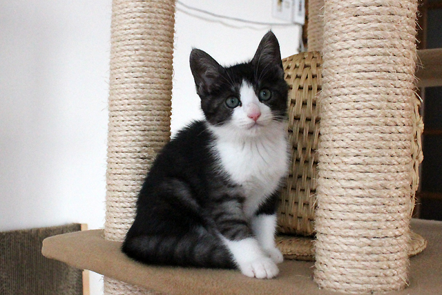 保護子猫lico(リコ) 体重:900g