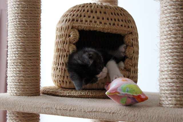 小さい猫つぐら