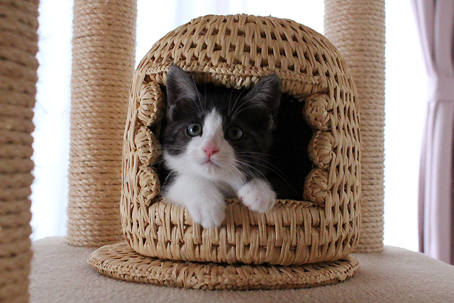 子猫用猫つぐら(猫ちぐら)