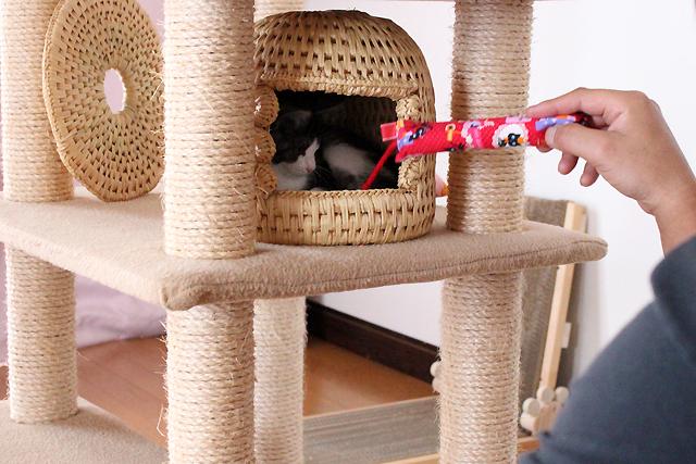 保護子猫lico(リコ)ちゃん、お見合い