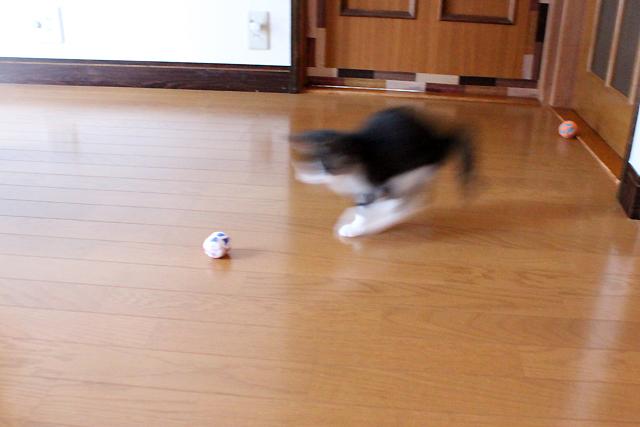 ボール遊び大好き!