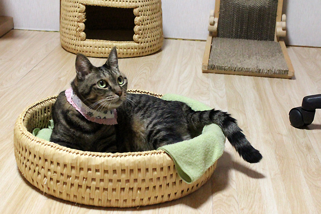 猫つぐら丸形なかよしベッド