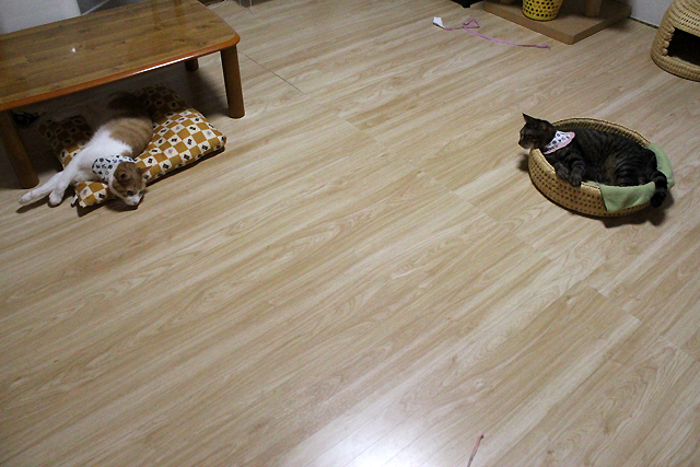 動かない猫ら