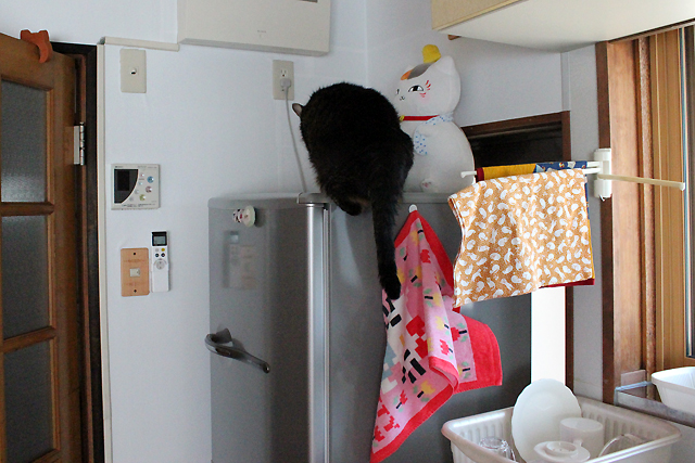 冷蔵庫へジャンプ