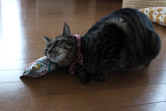 またたび入り手作りキッカー「キャットコミックス」で遊ぶ猫、おめぐさん