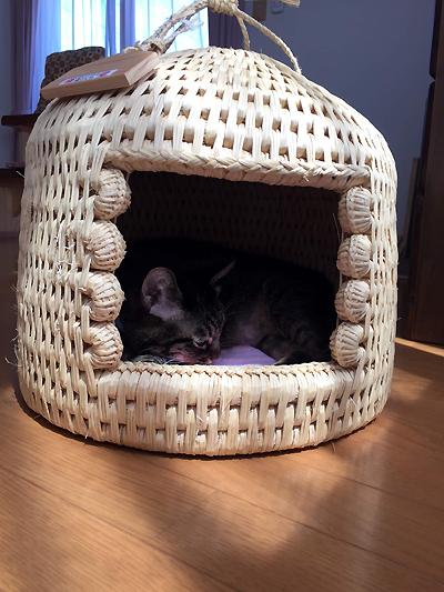 猫つぐらに入る猫堂店長