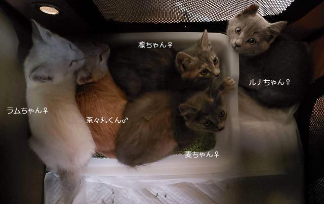 子猫5ニャン保護