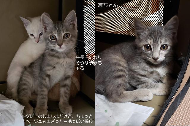 保護子猫、凛ちゃん