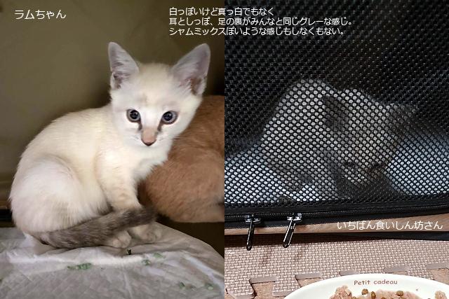 保護子猫、ラムちゃん