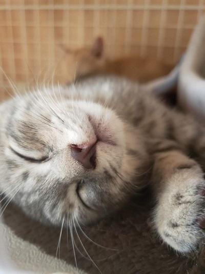 保護子猫、安心