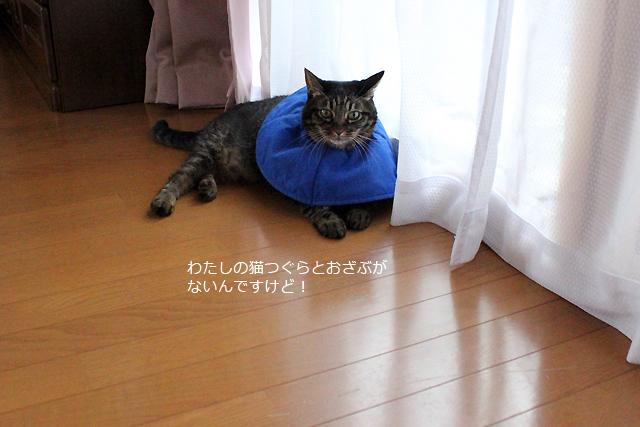 猫つぐらとおざぶはちゃあ部屋へ