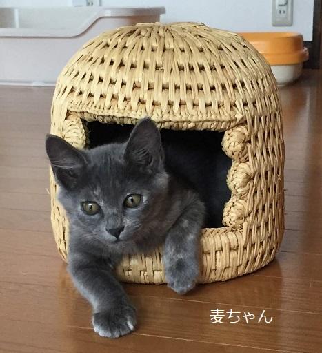 小さい猫つぐら麦ちゃん