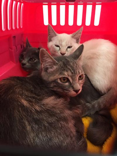 保護子猫ワクチン接種