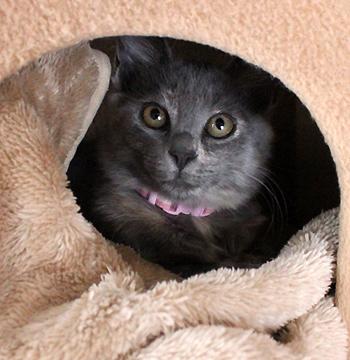 保護子猫麦ちゃん新しい家族を探しています!