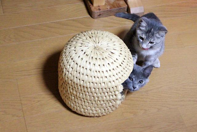 ちいさい猫つぐら(猫ちぐら)