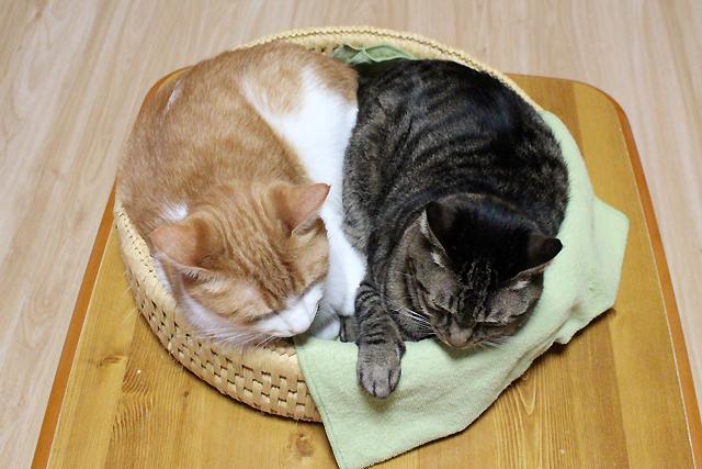 おめぐさんとをちび、仲良し猫
