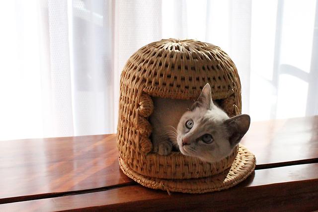 小さい猫つぐらからラムちゃん