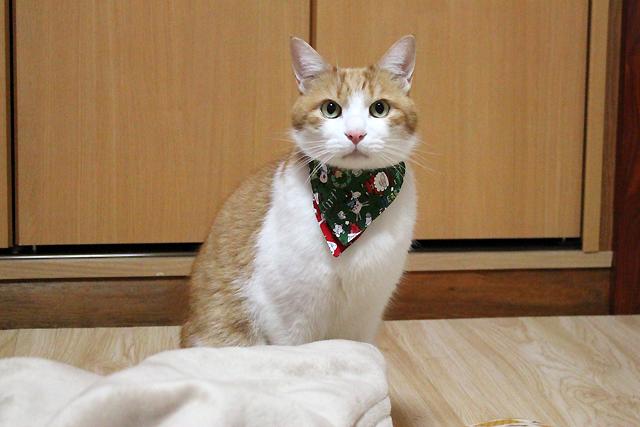 猫の首輪用付け替えバンダナ、クリスマス柄