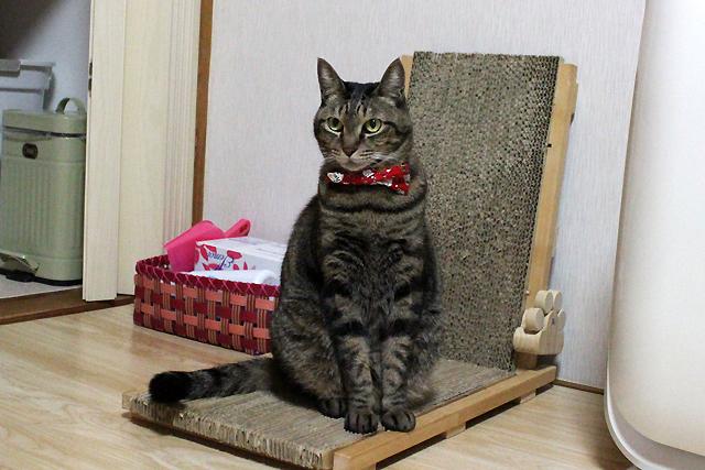 猫の首輪用、付け替えリボンクリスマス柄
